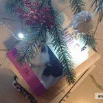 libri sotto l'albero